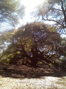 Angel oak3