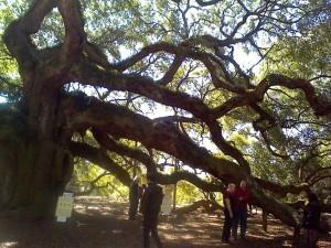 Angel oak4