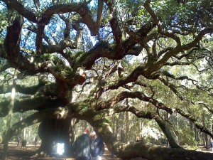 Angel oak5