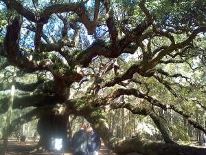 Angel oak5