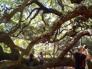 Angel oak7