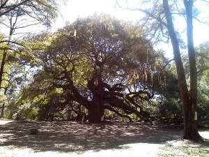 Angel oak8