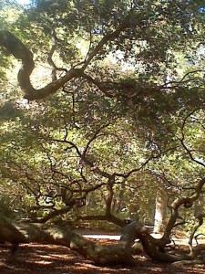 Angel oak9