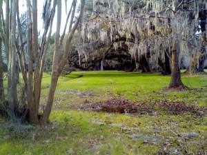 Charleston Live Oaks Magnolia Plantation