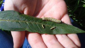 Caterpillar01 009