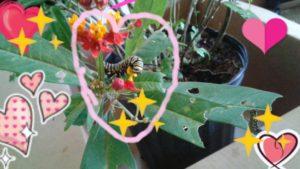 Caterpillars to Butterflies take 10 037