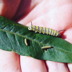 Caterpillar01 020
