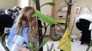 Caterpillars to Butterflies take 3 011